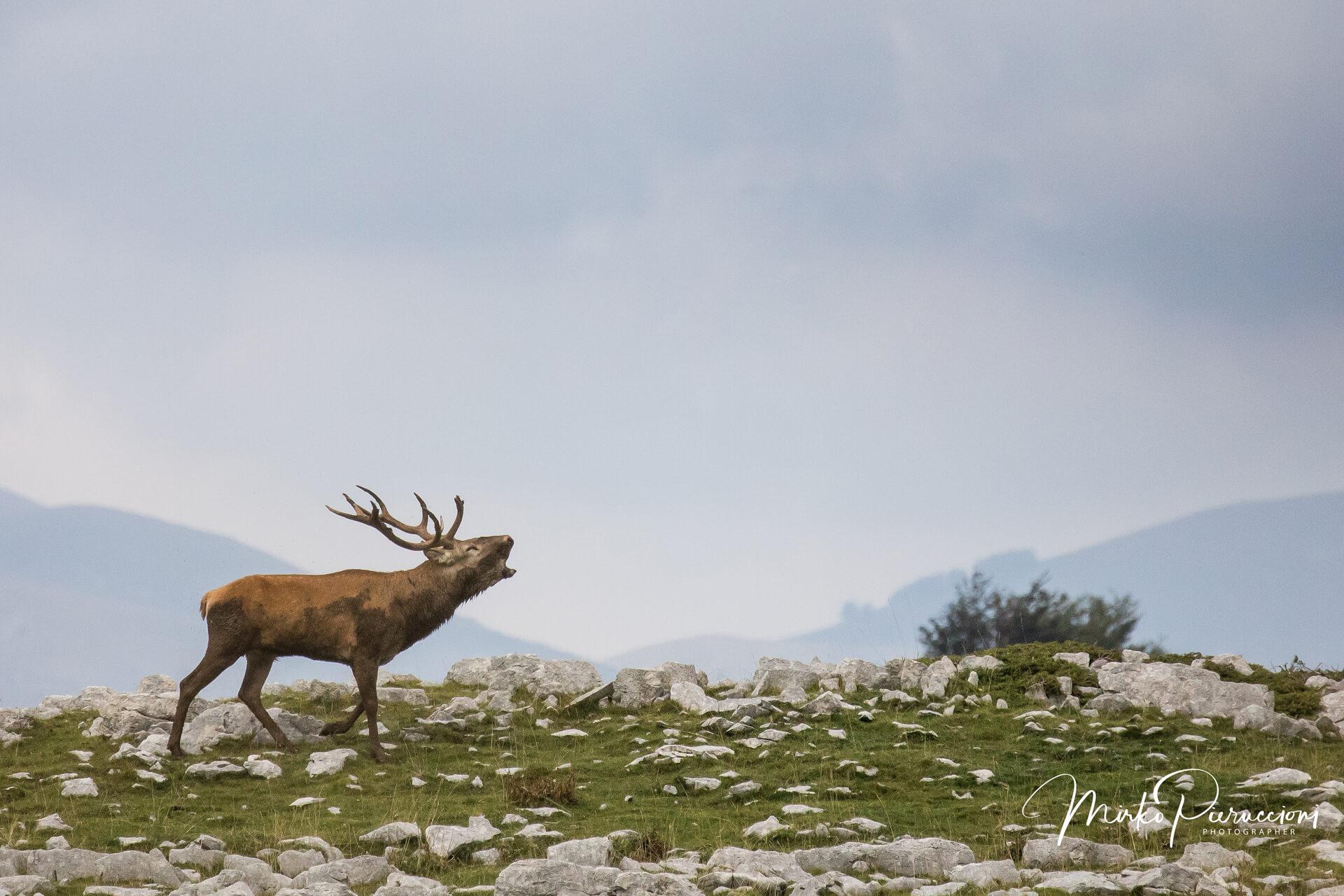 Abruzzo-Bramito-2018-2