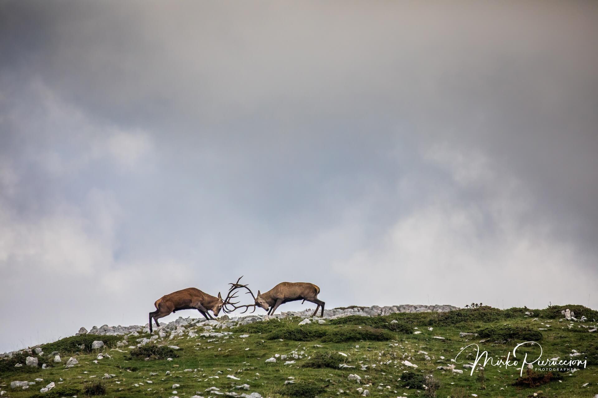 Abruzzo-Bramito-2018-4