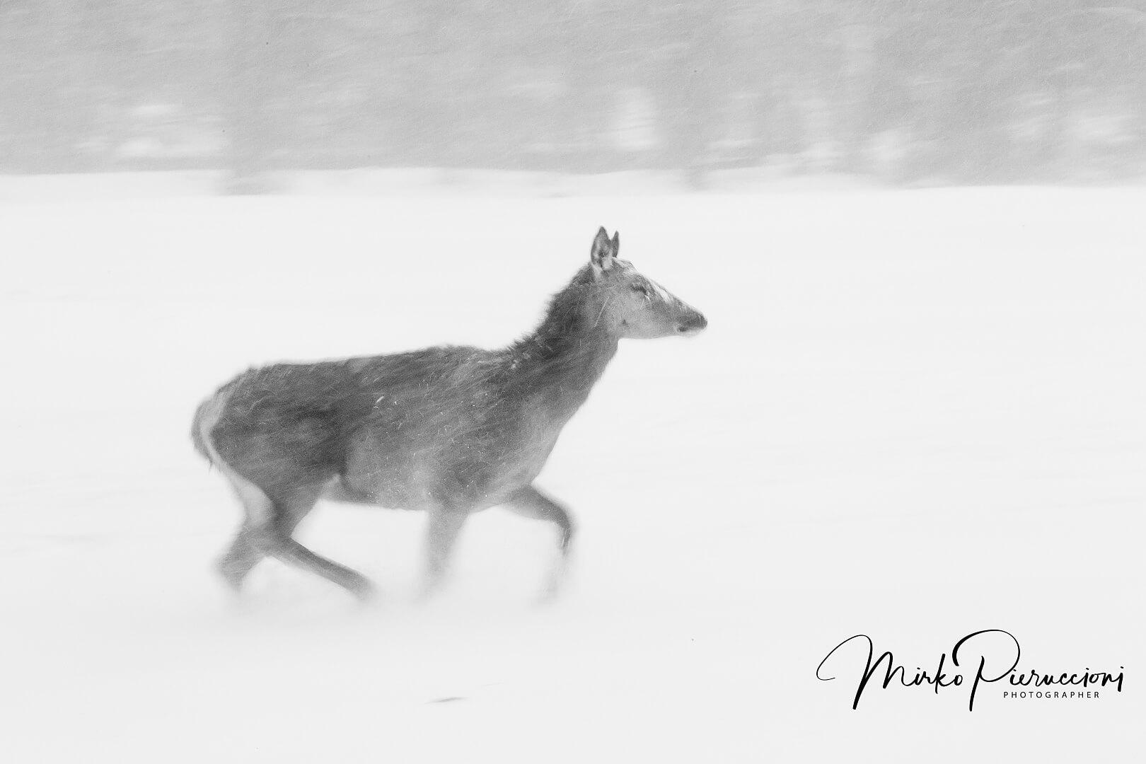 Abruzzo-Inverno-2017-2