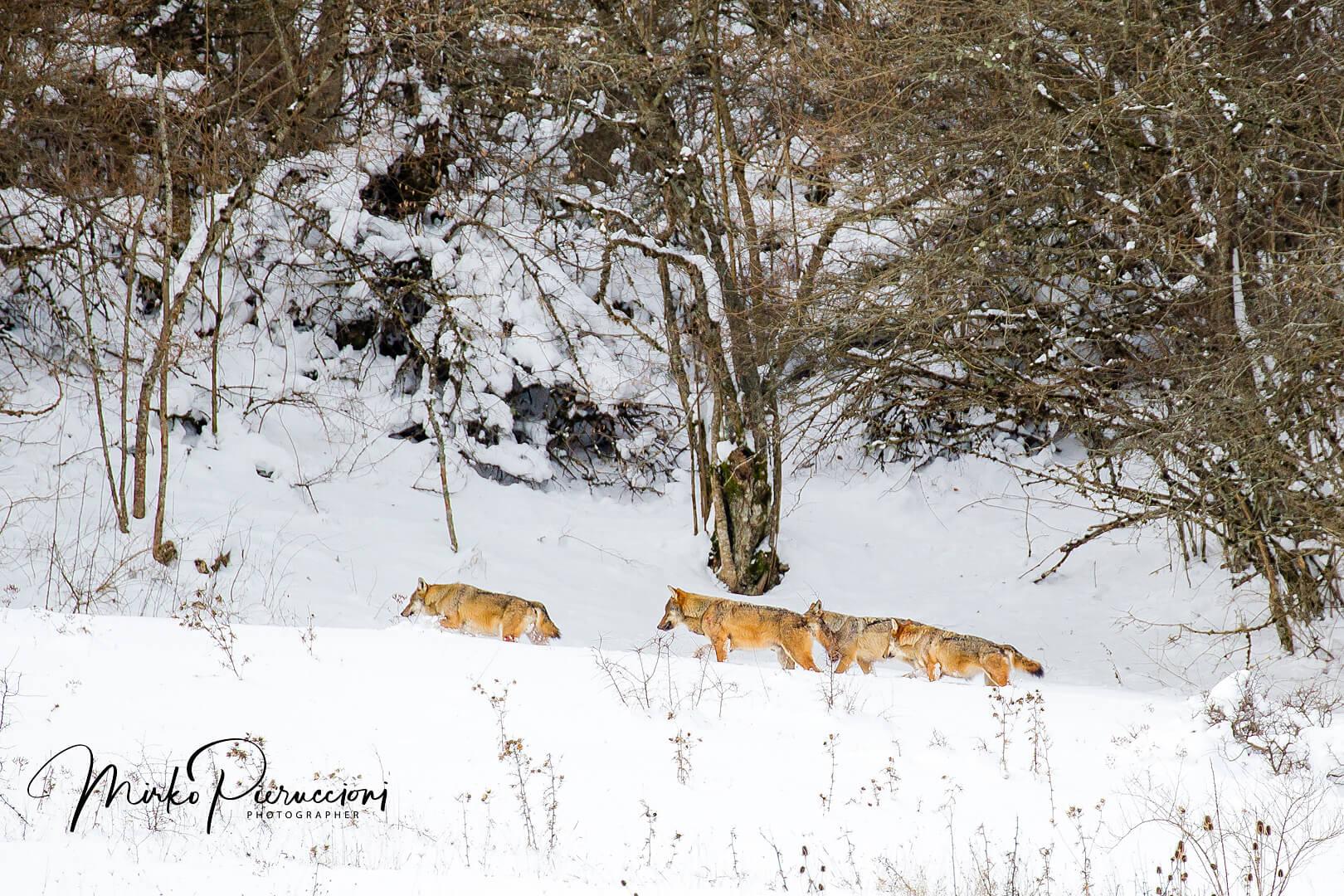 Abruzzo-Inverno-2017-3