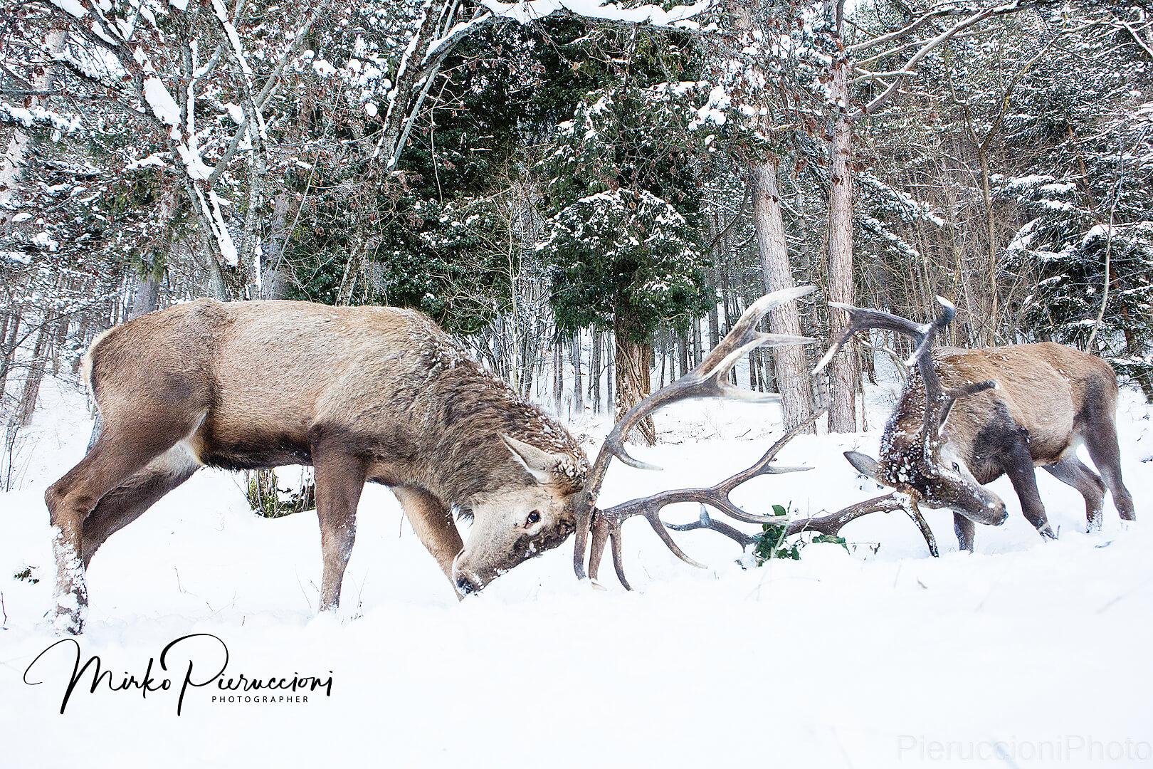 Abruzzo-Inverno-2017-6