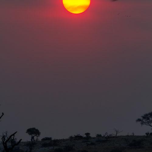 Botswana 2012 Gallery 14