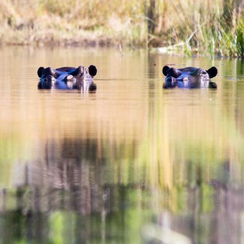 Botswana 2012 Gallery 18