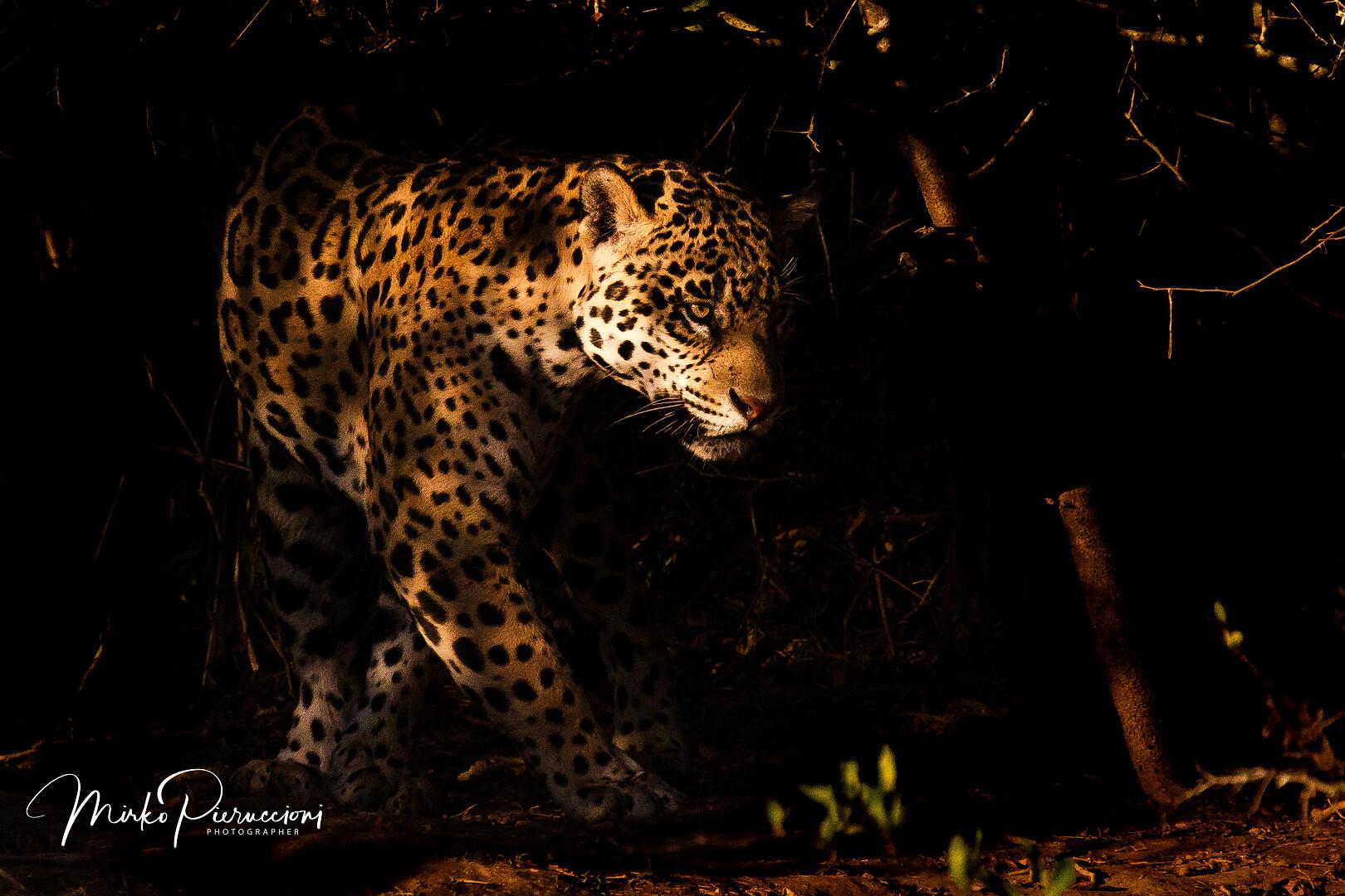 Pantanal-2017-3