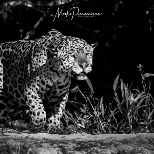 Pantanal Tour 2017 Gallery 01
