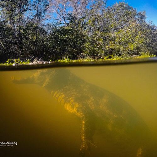 Pantanal Tour 2017 Gallery 11