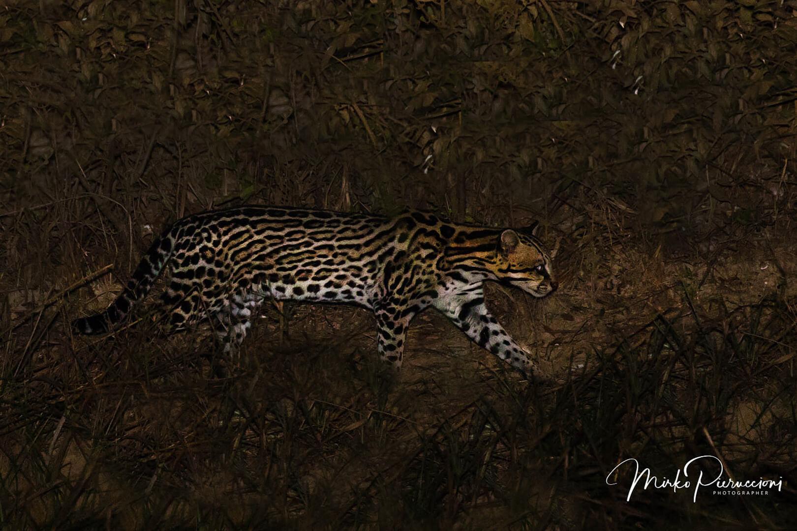 Pantanal-Tour-2018-2