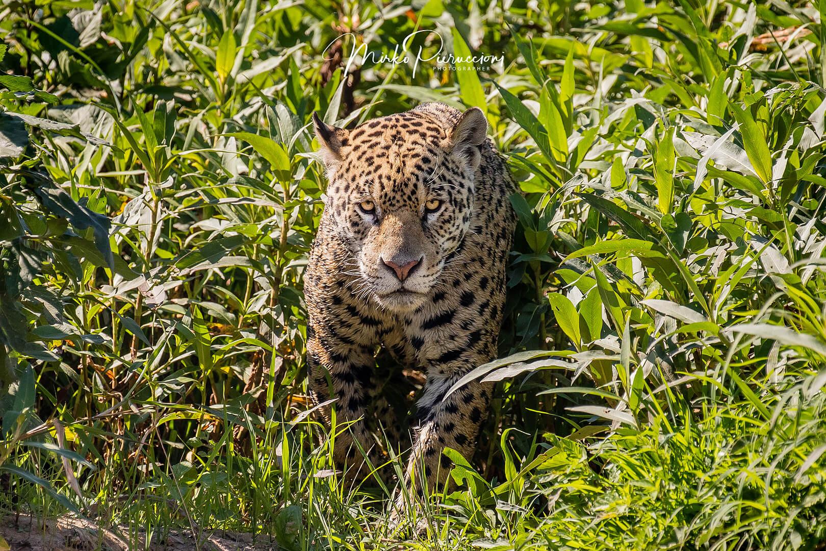 Pantanal-Tour-2018-5
