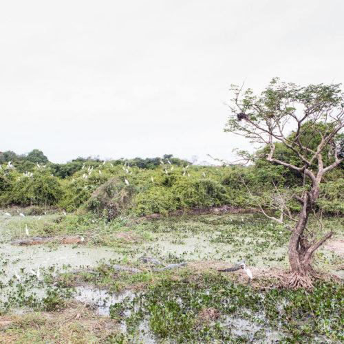 Pantanal Tour 2018 Gallery 01