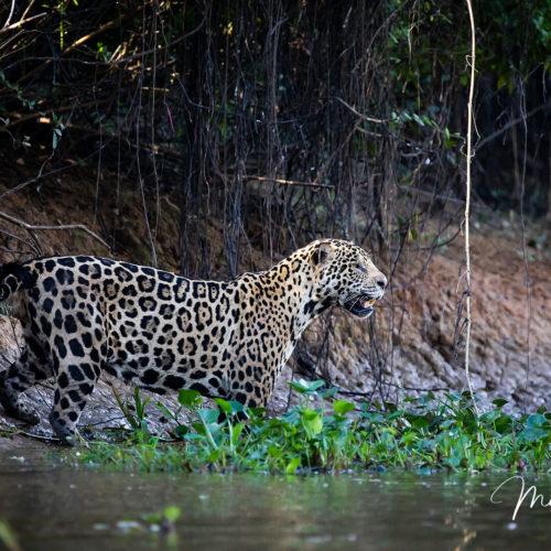 Pantanal Tour 2018 Gallery 24