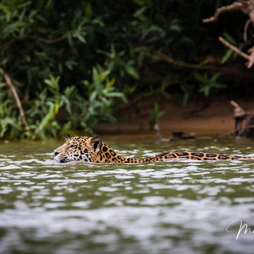 Pantanal Tour 2018 Gallery 30