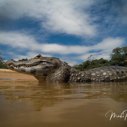 Pantanal Tour 2018 Gallery 47