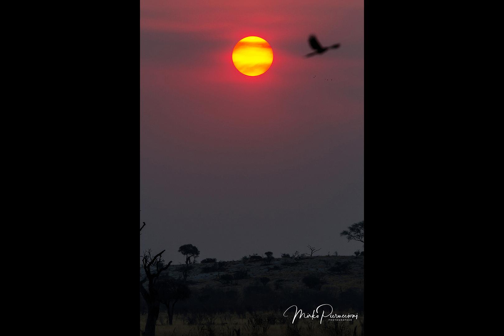Phototour-Botswana-2019-4