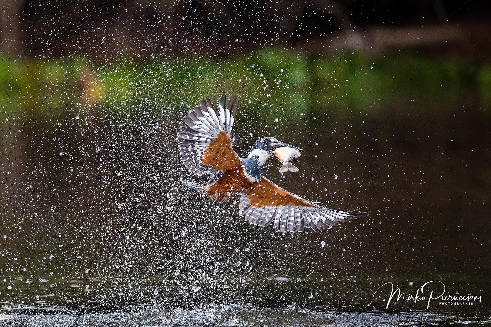 Phototour-Pantanal-2019-2