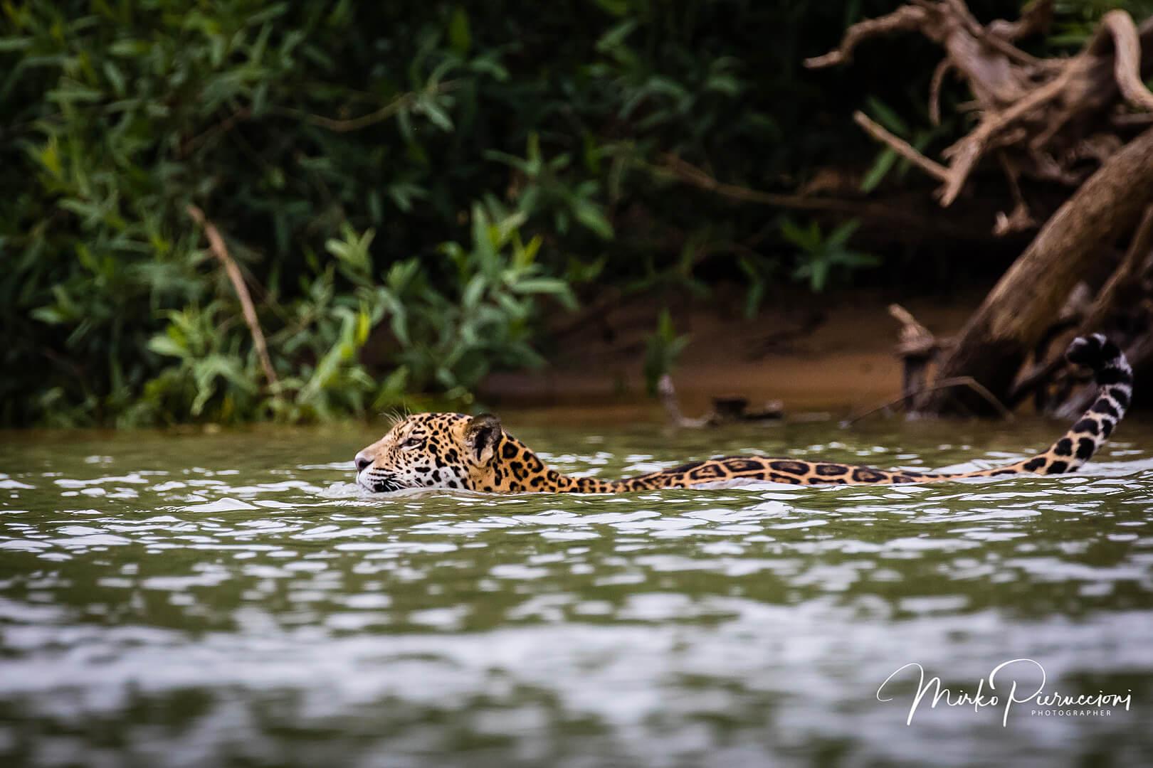 Phototour-Pantanal-2019-4