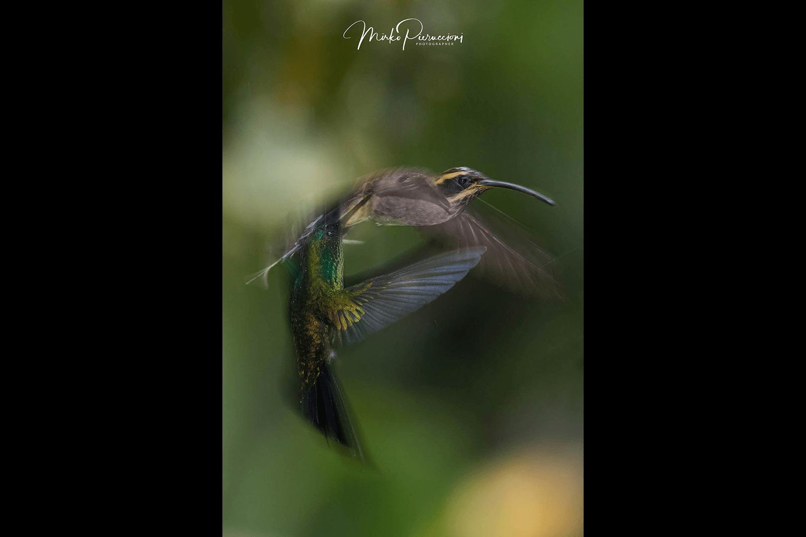 Phototour-Pantanal-2019-7